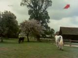 Приключения Чёрного Красавчика 1 сезон 1x06 - Warhorse