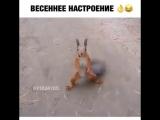 Белка танцует