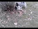 щенята играют очень мило