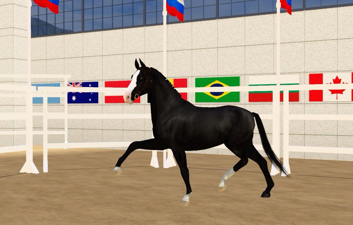 Регистрация лошадей в RHF 2 - Страница 4 Q6fRyTXJXlA