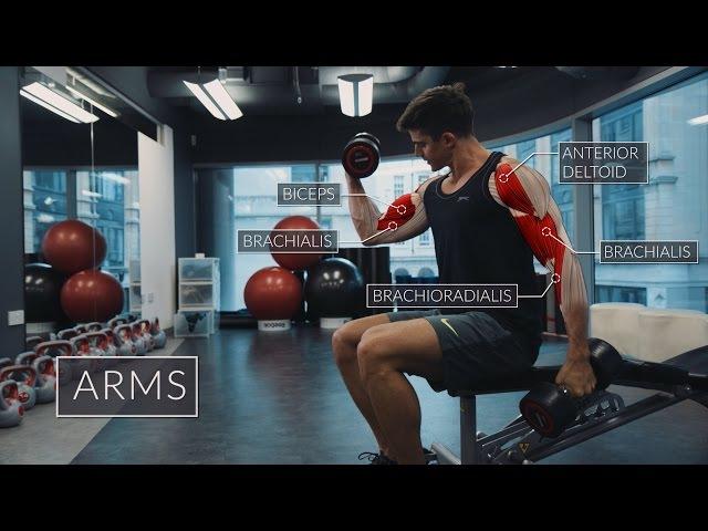 Exercise Anatomy: Arms Workout | Pietro Boselli