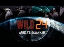 Дикие животные 24 часа Африканская саванна