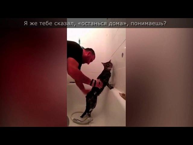 Чеченец со стойким котом покорили кавказский интернет