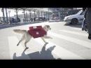Московская пиццерия доставляет заказы на собаках