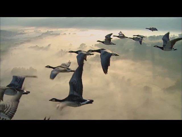 Ozric Tentacles - Misty Gliss
