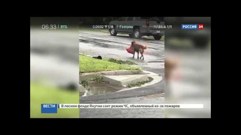 Находчивый пес, спасающийся от урагана Харви, стал героем Интернета
