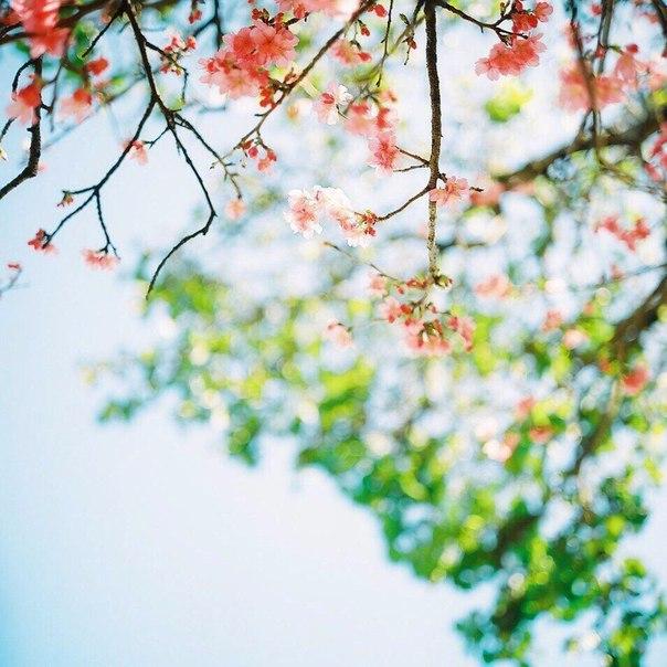 Учись у весны! Расцветай!