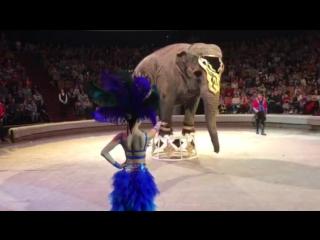 Шоу слонов великанов-великанов в Тюмени