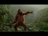 Орангутанг dance (Балаган Лимитед - Серёженька) 1920х1080