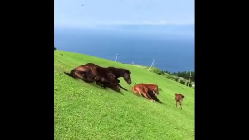 лошади катятся с горки