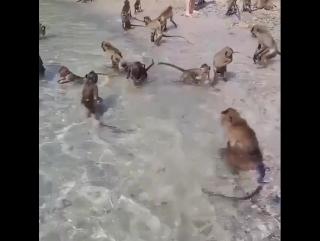 Monkeys in Thailand