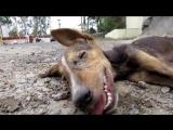Они нашли на улице мертвую собаку. Как вдруг случилось нечто невозможное…