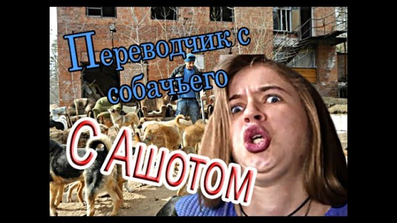 Злой кинолог: переводчик с собачьего с Ашотом