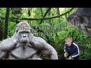 Продаю детей на EBay - Эксперт по джунглям 1 (Видеочат 18 )