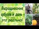 Выращивание арбузов и дынь это реально семинар основные правила