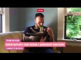 Гаджет Licki Brush для лизания домашних животных