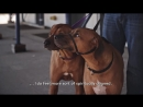 О работе собачьего фотографа