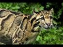 National Geographic. Суперхищник. Большие кошки. Документальный фильм.