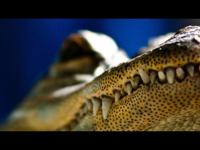 Самые опасные животные Австралии. Смертоносные хищники и охотники. Дикая природ...