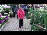 Южная Корея. Сеул. Район Сочхо-гу. Цветочный рынок. (648)