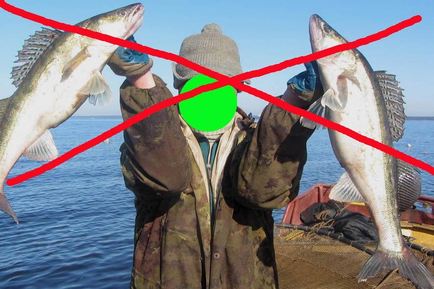 А осенний нерестовый запрет: рыбалка в ленинградской области осенью читайте по ссылке.