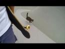 GoPro Didga the Skateboarding Cat