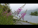 Летние цветы и листва   природа   релаксация