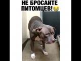 Сотрудница приюта для животных запечатлела на видео 4-летнего бульдога Электру, к1...