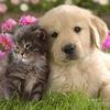Животные Брест   Животные даром   Отдам даром