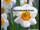 Пасхальний VLOG Наші пасхальні подарунки дітям Ірина Берегиня