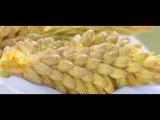 Новая Эра Как действует Сосновая Пыльца и Бамбук на организм