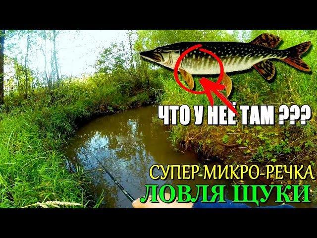 Вот это да ЩУКА С СЮРПРИЗОМ ВНУТРИ! ЛУЧШАЯ рыбалка на МИКРО-РЕЧКЕ в этом сезоне!