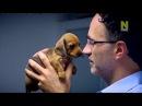 Супер ветеринар / The SuperVet (20 серия/4c)