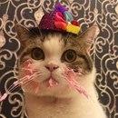 Когда у тебя день рождения, сидишь ешь свой заслуженный торт…
