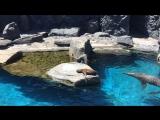 Мистик аквариум