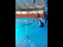 Дельфинарий Немов Джубге