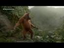 Маймуна торкнуло (Dancer)