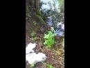 чудо зверь водяная крыса на рыбалке 1
