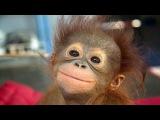 Funny Monkeys Compilation NEW