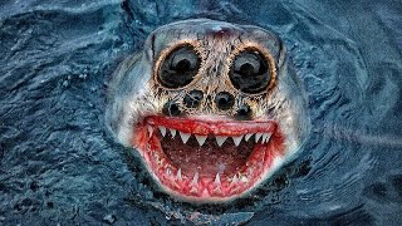 5 Самых необычных видов акул