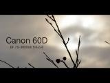 Snow - Canon EF 75-300mm f4-5.6 III Lens Test