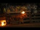 Maltraitance animale : Lorsque l'humain met le feu aux cornes d'un taureau juste pour le fun