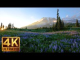 4K Relaxation 3-hour Loop Video - Wild Flowers of Mount Rainier with Nature Sounds