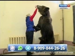 По факту выгула медведя по центральной улице Хабаровска правоохранительные органы начали доследственную проверку
