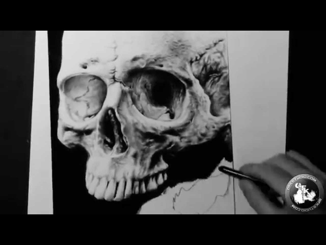 Realistic Skull drawing (GFKStudio)