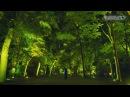 Resonating Trees – Forest of Tadasu at Shimogamo Shrine / Resonating Spheres – Forest of Tadasu at Shimogamo Shrine