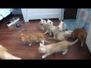 Какие милашки, Няшки / cute cats