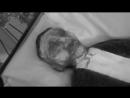 ● Emmett Till's funeral (1955)