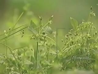 Божий дар ( Фильм о целебных растениях ) ...