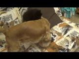 Шарлотта и Кнопочка играют:)